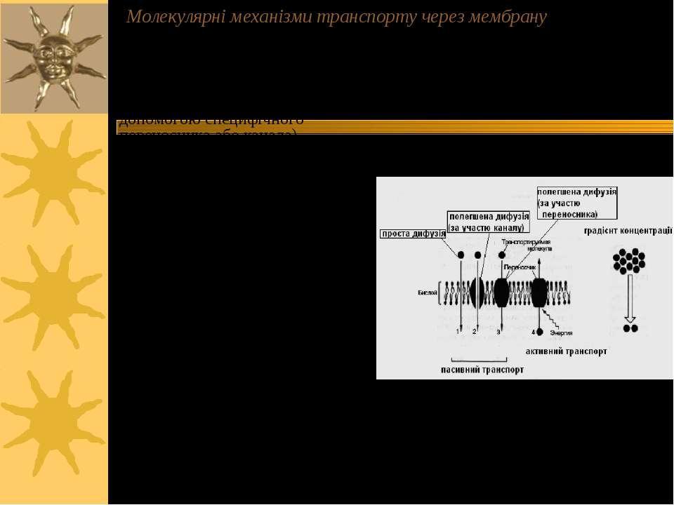 Молекулярні механізми транспорту через мембрану - пасивний транспорт ( за гра...