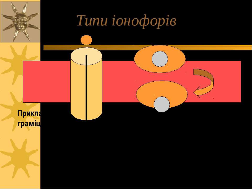 Типи іонофорів Приклад: валіноміцин Приклад: граміцидин A