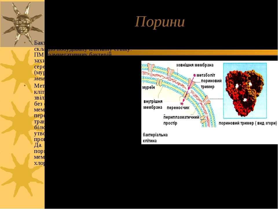 Порини Бактерії мають одну, але достатньо складно побудовану клітинну стінку....