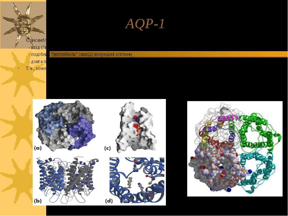 AQP-1 Є ансамблем 4-х с/о; кожна з них має 3 основні структурні ділянки: - вх...