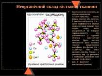 Неорганічний склад кісткової тканини Кристали кістки належать до гідроксилапа...