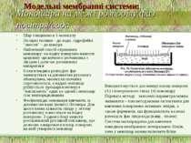 Моношари на межі розподілу фаз повітря/вода Шар товщиною в 1 молекулу Полярні...
