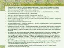 Використання ліпосом: наукові дослідження Ліпосоми застосовують як експеримен...
