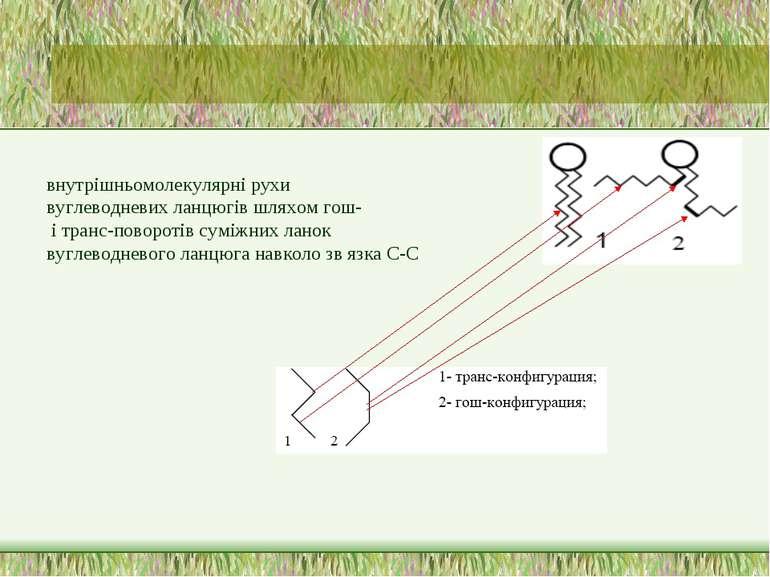 внутрішньомолекулярні рухи вуглеводневих ланцюгів шляхом гош- і транс-поворот...