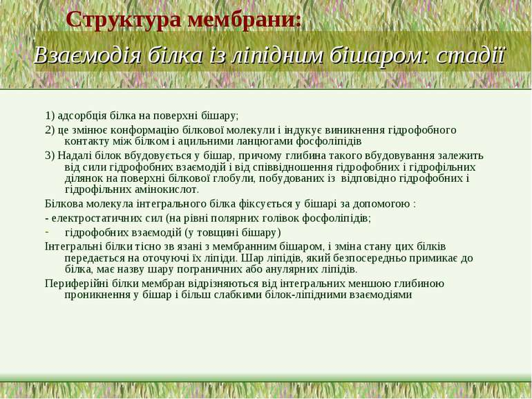Взаємодія білка із ліпідним бішаром: стадії 1) адсорбція білка на поверхні бі...