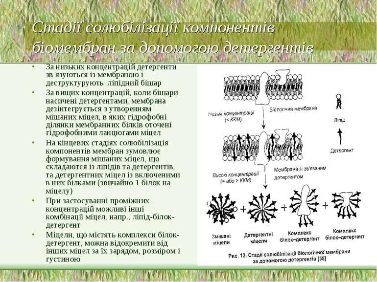 Стадії солюбілізації компонентів біомембран за допомогою детергентів За низьк...