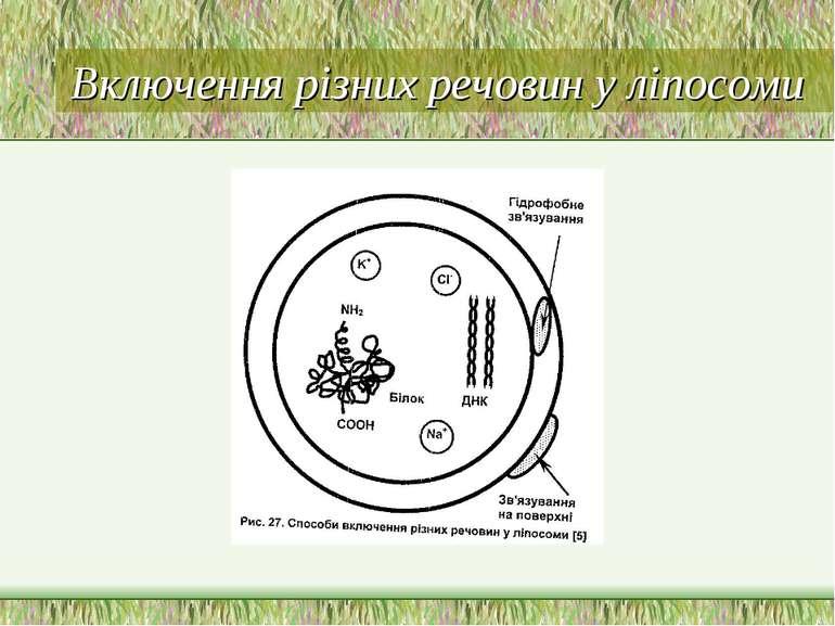 Включення різних речовин у ліпосоми