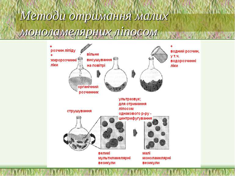Методи отримання малих моноламелярних ліпосом