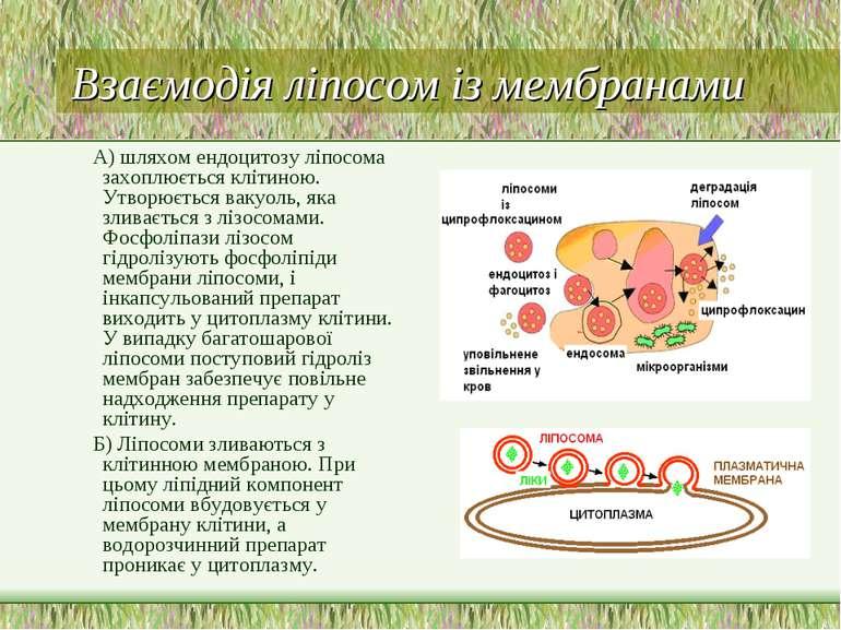 Взаємодія ліпосом із мембранами А) шляхом ендоцитозу ліпосома захоплюється кл...