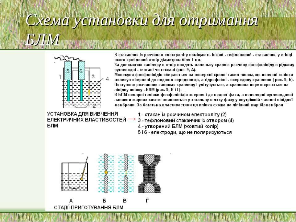 Схема установки для отримання БЛМ