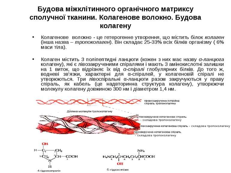 Будова міжклітинного органічного матриксу сполучної тканини. Колагенове волок...