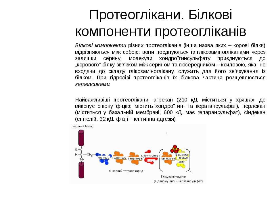 Протеоглікани. Білкові компоненти протеогліканів Білкові компоненти різних пр...