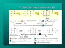Схема синтезу кетонових тіл