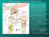 Роль печінки у пігментному обміні Розпад гемоглобіну з утворенням непрямого (...