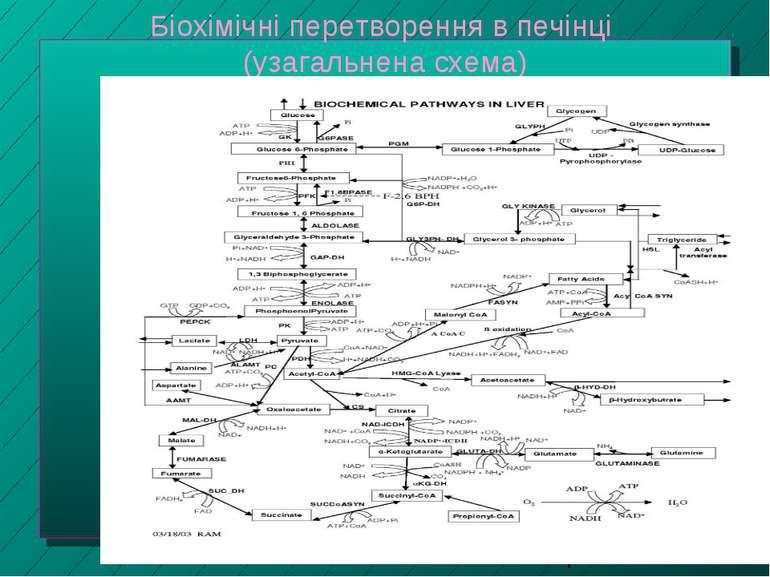 Біохімічні перетворення в печінці (узагальнена схема)