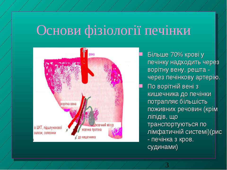 Основи фізіології печінки Більше 70% крові у печінку надходить через ворітну ...