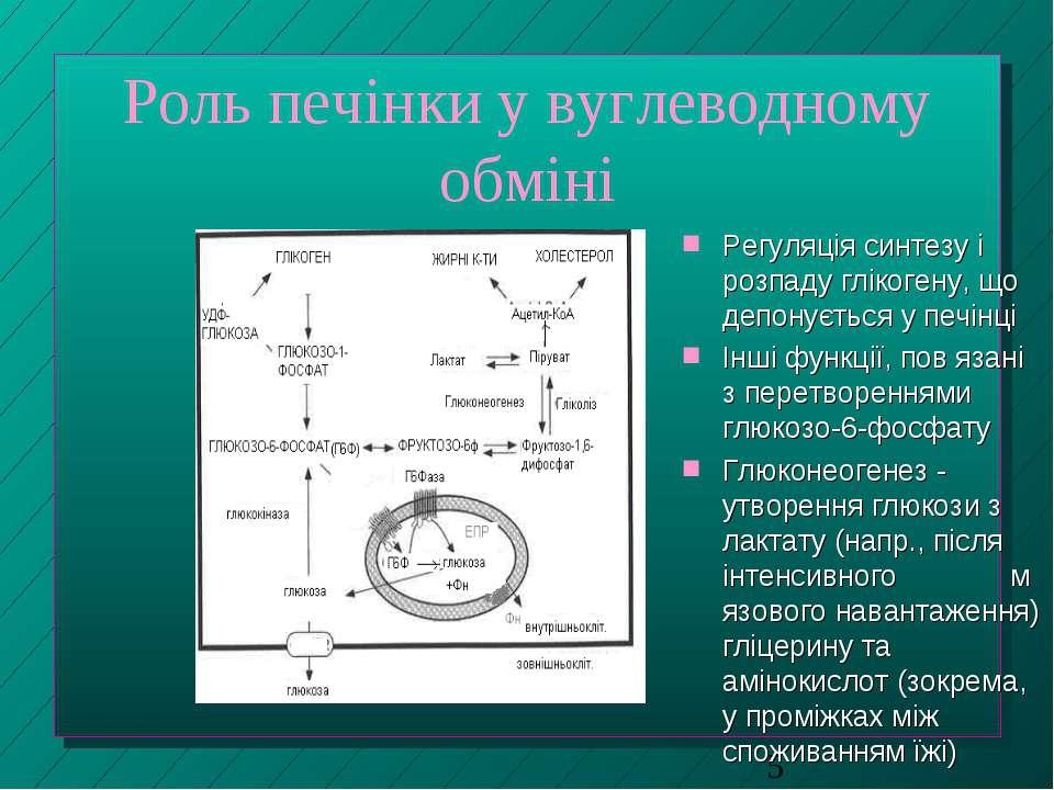 Роль печінки у вуглеводному обміні Регуляція синтезу і розпаду глікогену, що ...