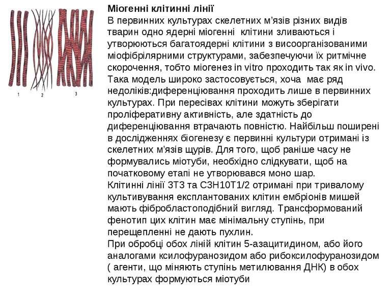 Міогенні клітинні лінії В первинних культурах скелетних м'язів різних видів т...