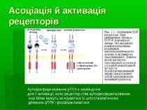 Асоціація й активація рецепторів Аутофосфорилювання рТПК є необхідним для її ...