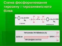 Схема фосфорилювання тирозину і тирозинвмісного білка