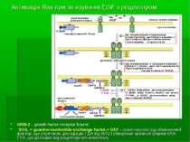 Активація Ras при зв язуванні EGF з рецептором GRB-2 - growth-factor-receptor...