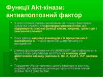 Функції Akt-кінази: антиапоптозний фактор У фізіологічних умовах активована р...