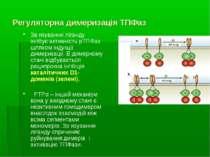 Регуляторна димеризація ТПФаз Зв язування ліганду інгібує активність рТПФаз ш...