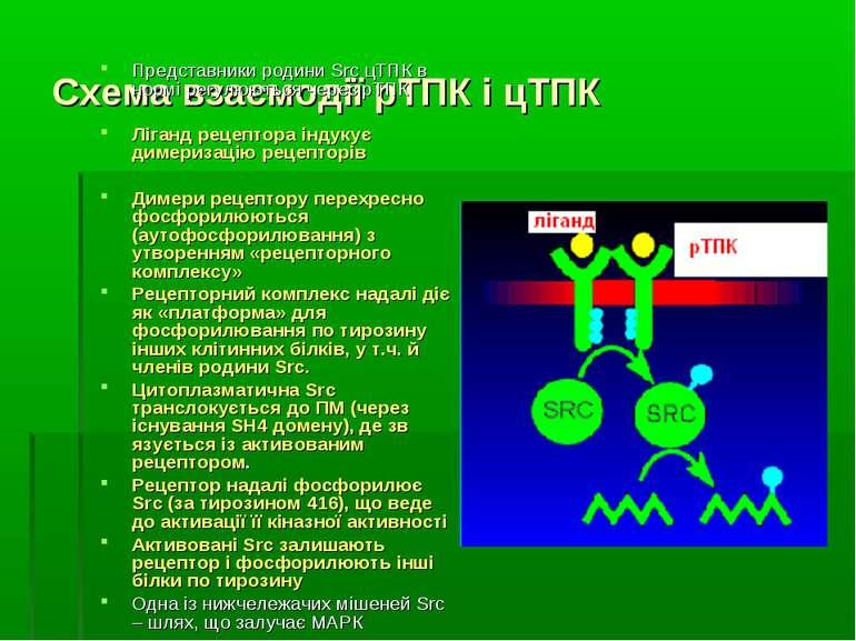 Схема взаємодії рТПК і цТПК Представники родини Src цТПК в нормі регулюються ...