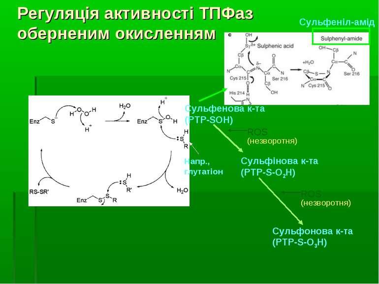Сульфінова к-та (PTP-S-O2H) Сульфонова к-та (PTP-S-O3H) ROS (незворотня) Напр...