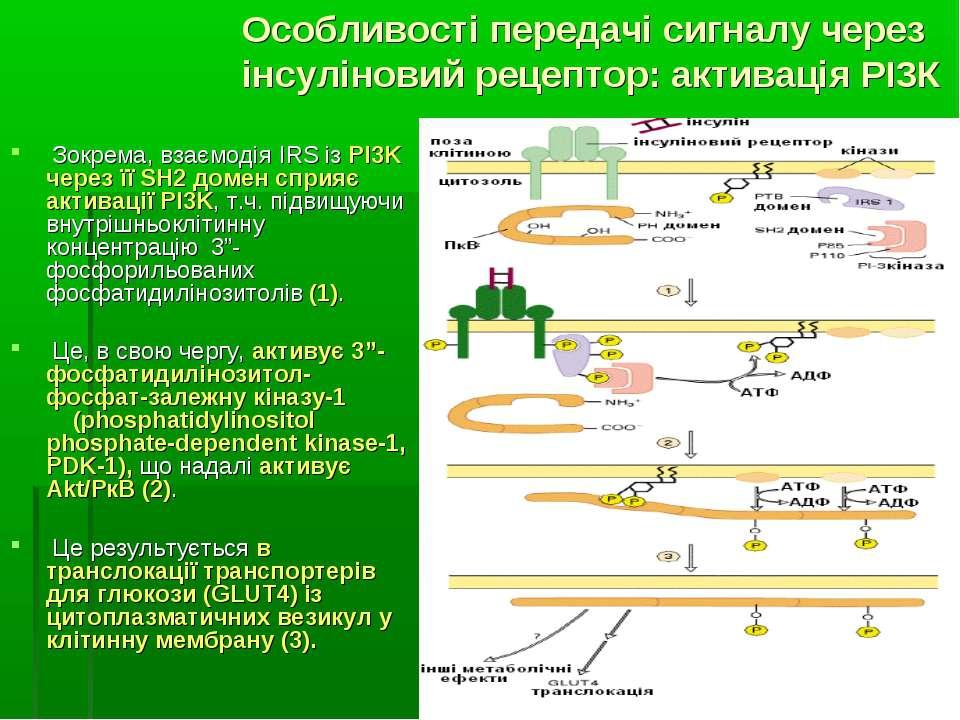 Зокрема, взаємодія IRS із PI3K через її SH2 домен сприяє активації PI3K, т.ч....