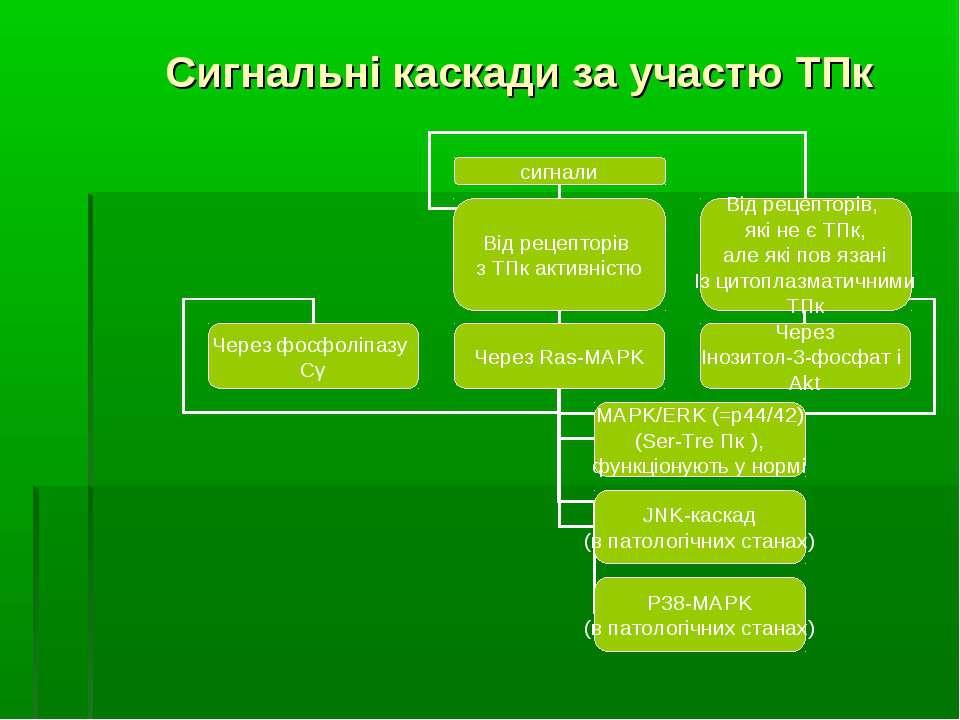 Сигнальні каскади за участю ТПк