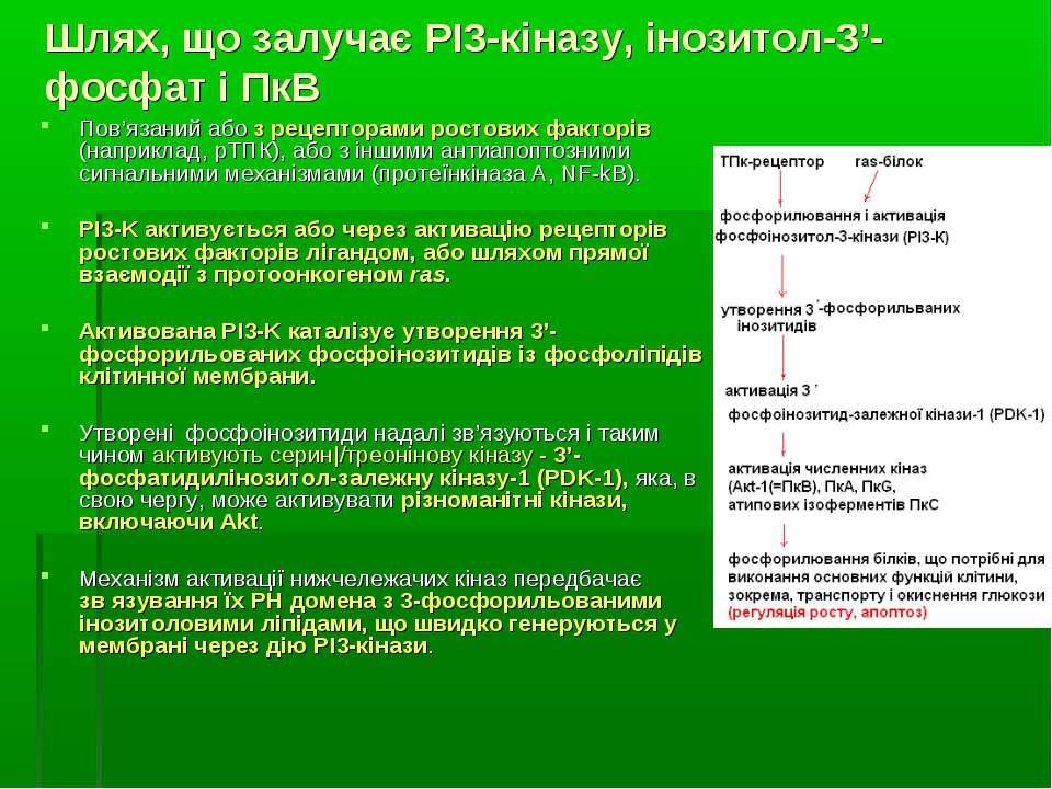 Шлях, що залучає РІ3-кіназу, інозитол-3'-фосфат і ПкВ Пов'язаний або з рецепт...