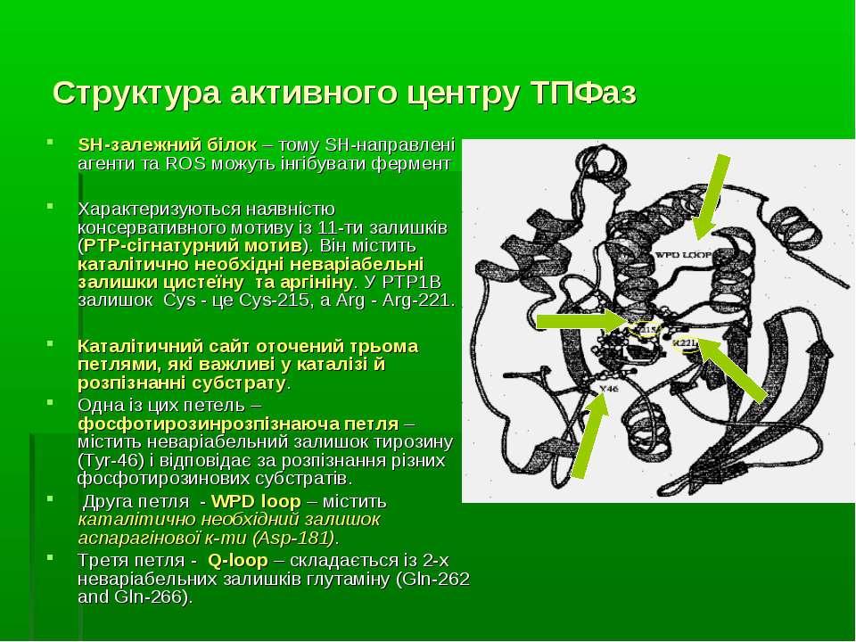 Структура активного центру ТПФаз SH-залежний білок – тому SH-направлені агент...