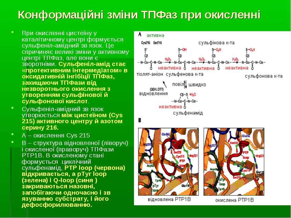 Конформаційні зміни ТПФаз при окисленні При окисленні цистеїну у каталітичном...