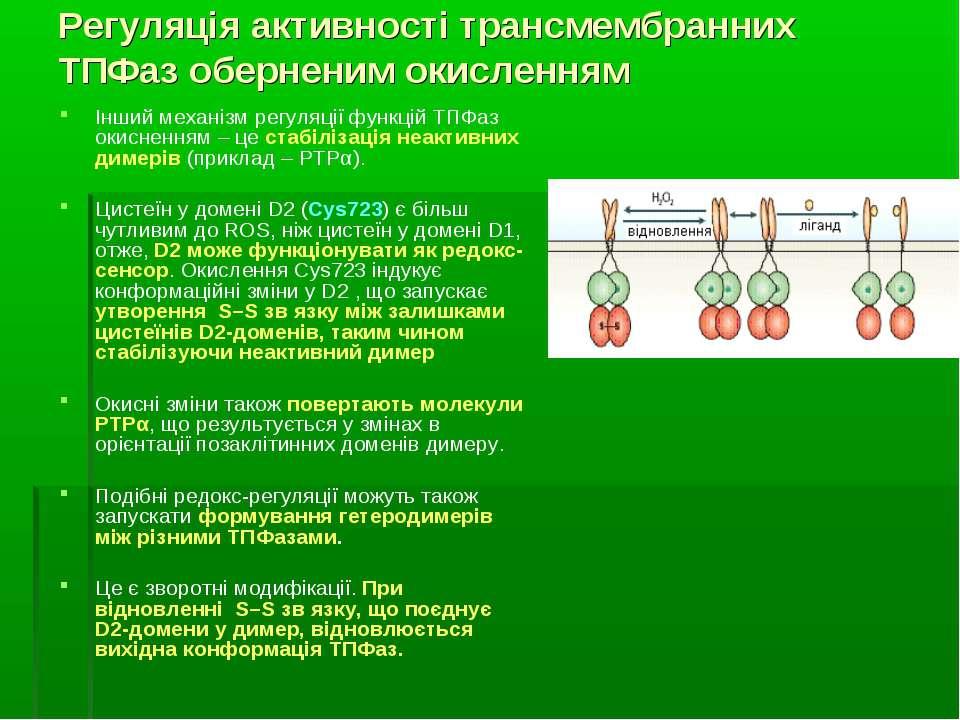 Регуляція активності трансмембранних ТПФаз оберненим окисленням Інший механіз...