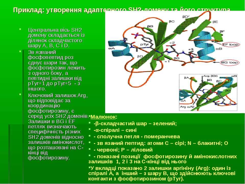 Приклад: утворення адаптерного SH2-домену та його структура Центральна вісь S...