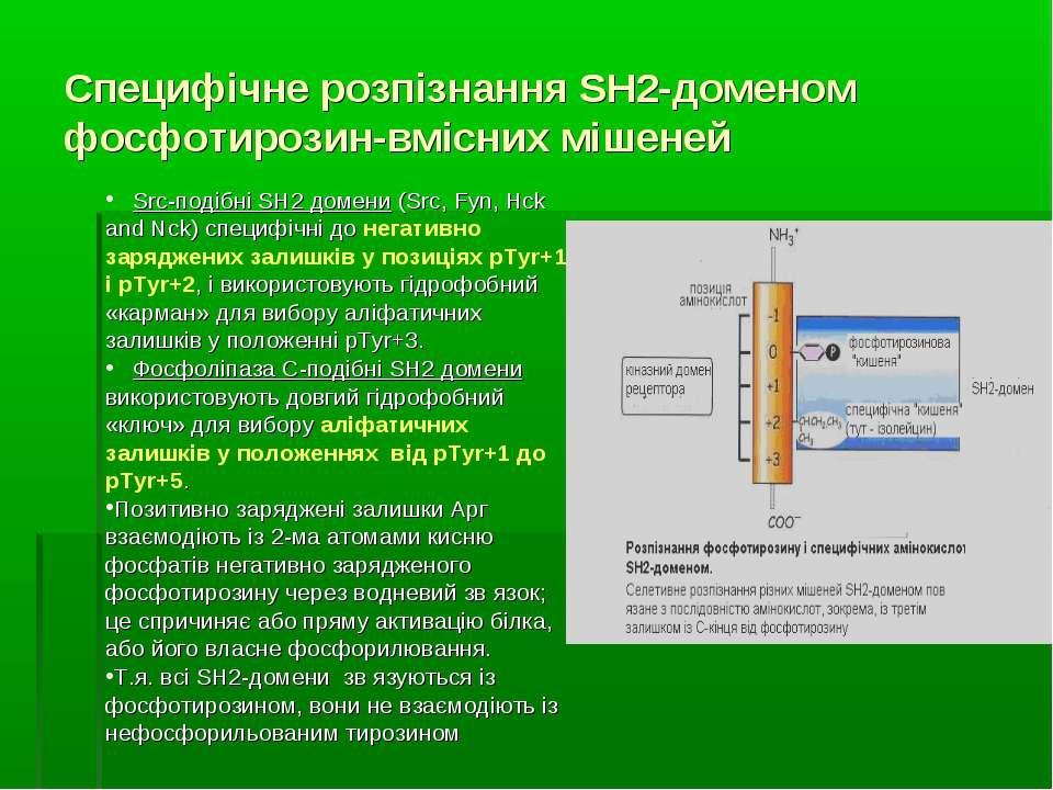 Специфічне розпізнання SH2-доменом фосфотирозин-вмісних мішеней Src-подібні S...