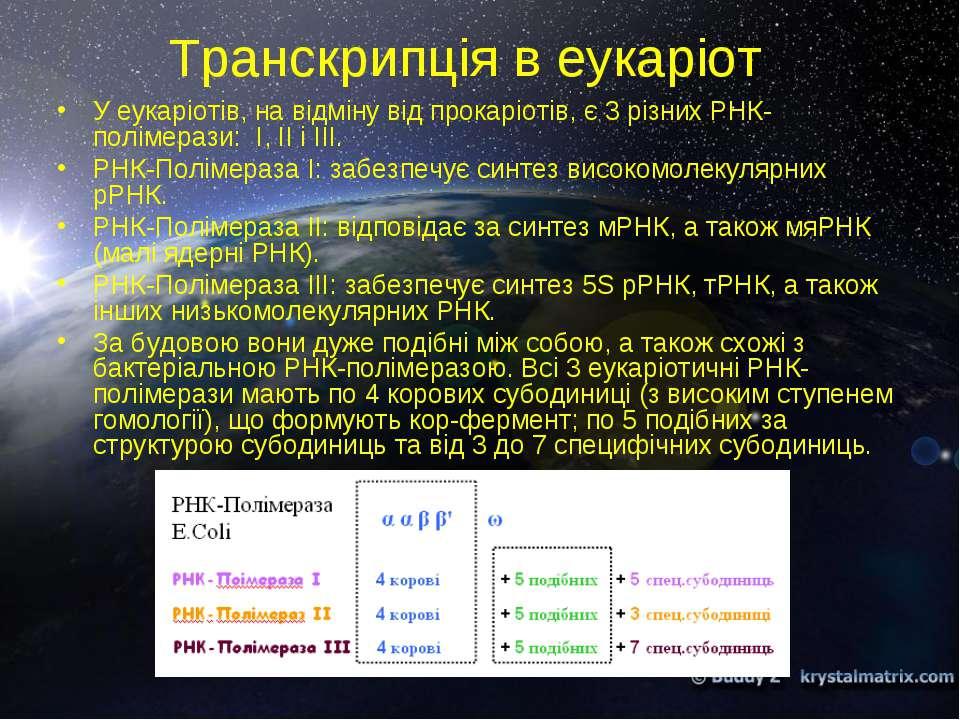Транскрипція в еукаріот У еукаріотів, на відміну від прокаріотів, є 3 різних ...