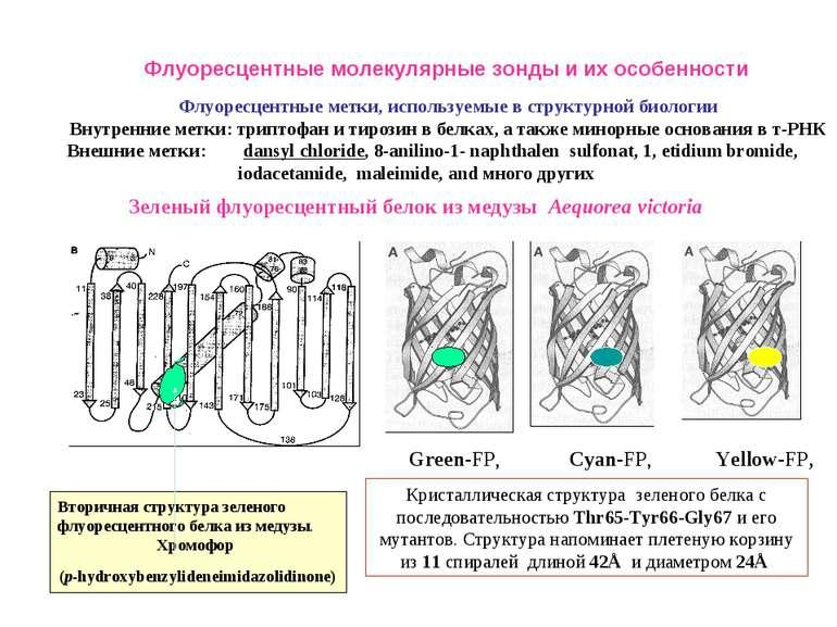 Флуоресцентные метки, используемые в структурной биологии Внутренние метки: т...