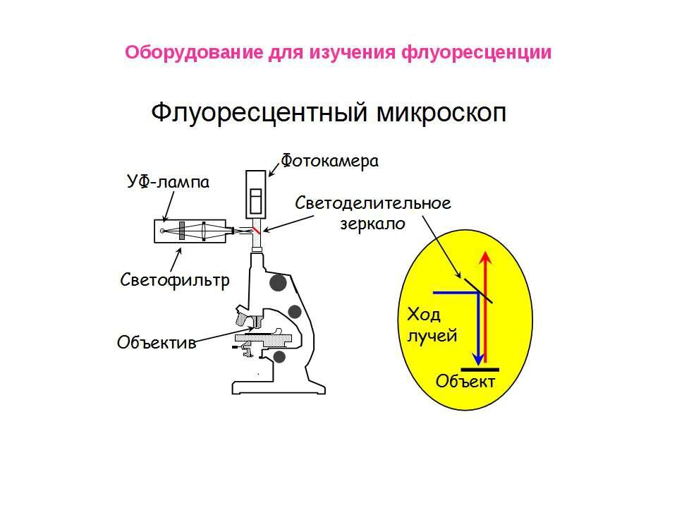 Оборудование для изучения флуоресценции
