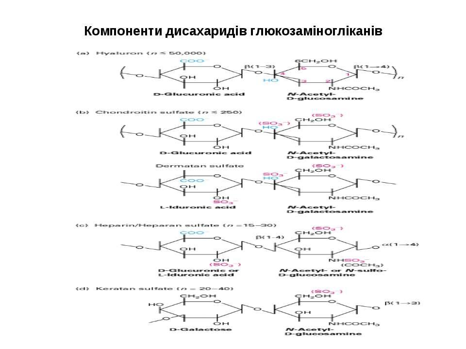 Компоненти дисахаридів глюкозаміногліканів