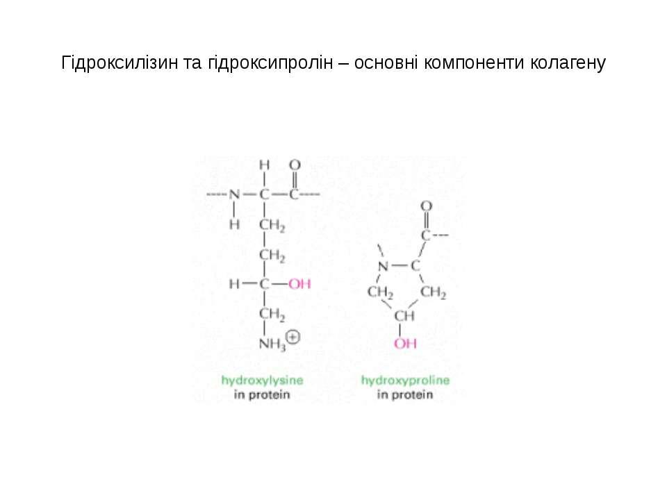 Гідроксилізин та гідроксипролін – основні компоненти колагену