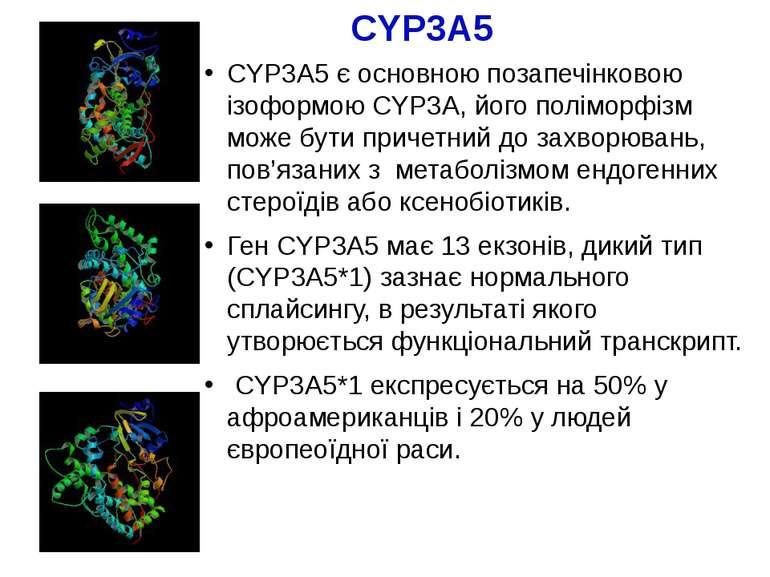 CYP3A5 CYP3A5 є основною позапечінковою ізоформою CYP3A, його поліморфізм мож...