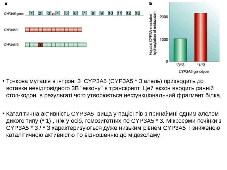 Точкова мутація в інтроні 3 CYP3A5 (CYP3A5 * 3 алель) призводить до вставки н...