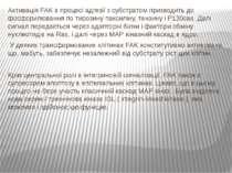 Активація FAK в процесі адгезії з субстратом призводить до фосфорилювання по ...