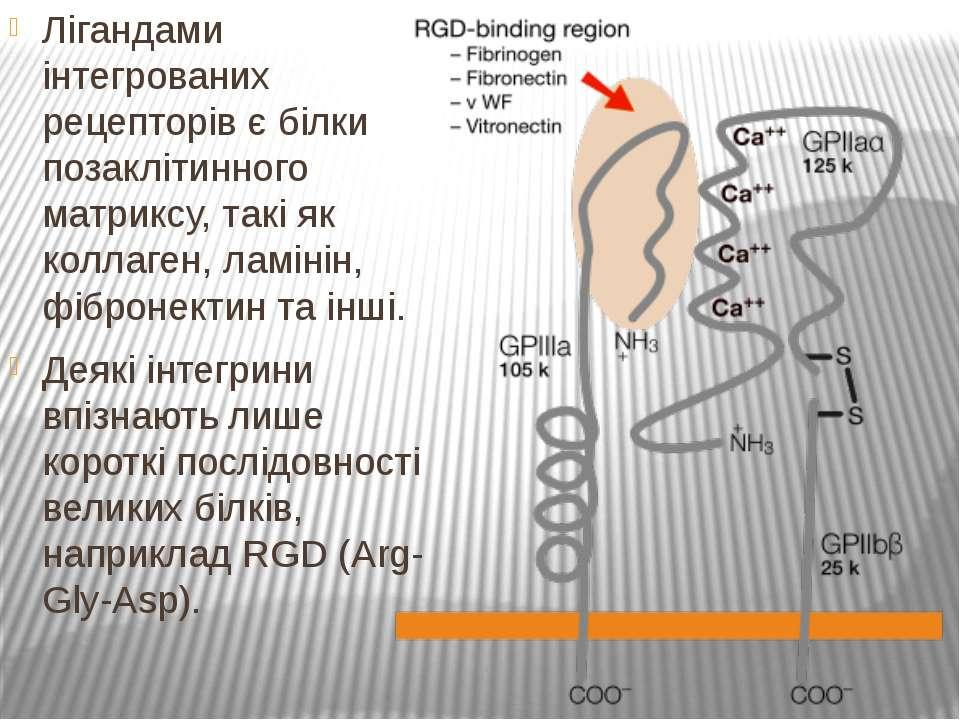 Лігандами інтегрованих рецепторів є білки позаклітинного матриксу, такі як ко...