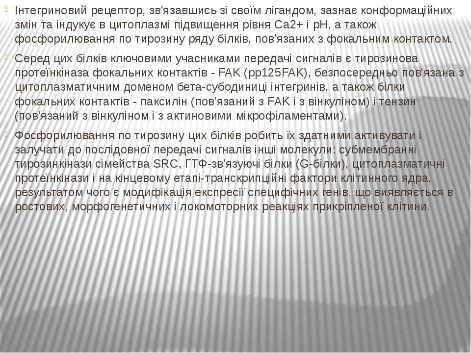 Інтегриновий рецептор, зв'язавшись зі своїм лігандом, зазнає конформаційних з...