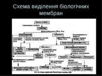 Схема виділення біологічних мембран