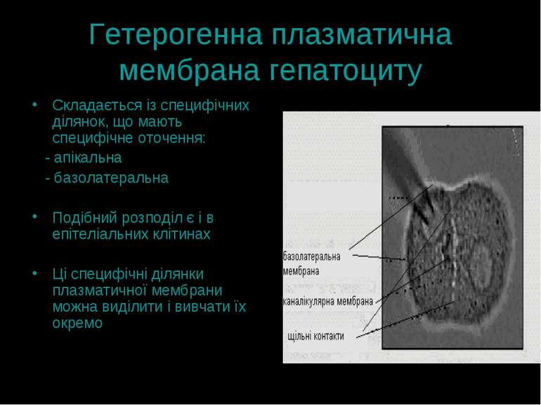 Гетерогенна плазматична мембрана гепатоциту Складається із специфічних діляно...