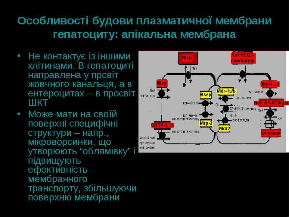 Особливості будови плазматичної мембрани гепатоциту: апікальна мембрана Не ко...
